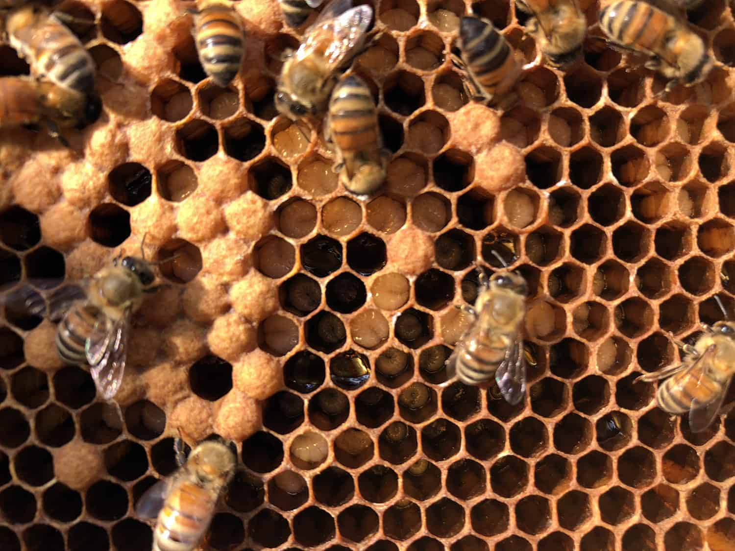 Calming your bees